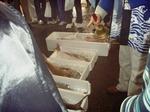 お魚祭り4