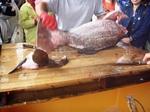 お魚祭り8