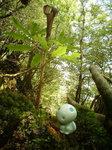 森の中のこだま