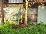 パパイヤの木と鳥