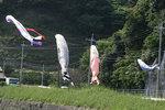 一湊川鯉のぼり