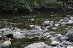 栗生川に白鷺