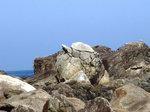 高平海岸のカメの型の大岩