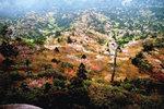 太鼓岩から山桜
