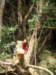 椎の木伐採