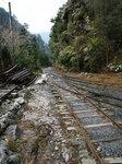 縄文杉へのトロッコ道