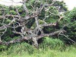 年老いた木