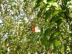 木の葉に蝶々