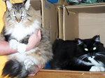 木村さんの猫たち