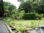 Mさんの庭